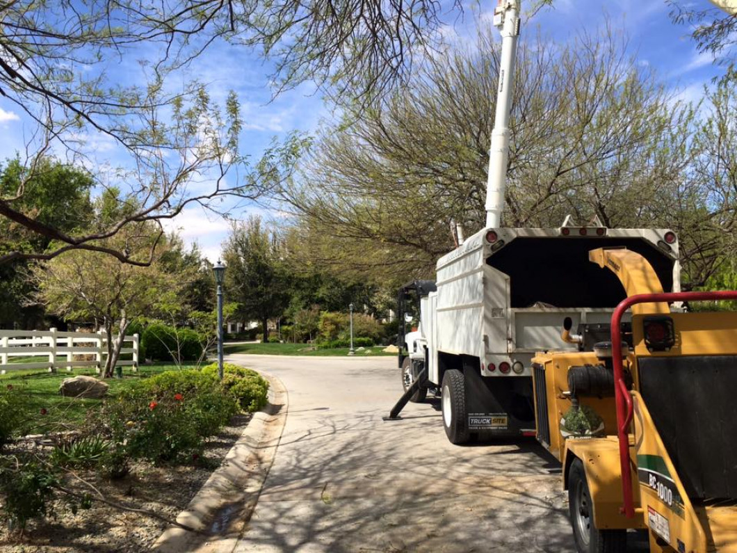3 reasons to hire a professional tree removal company